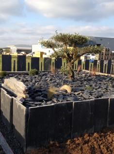 Vue sur le jardin zen décoré d'ardoise avec un olivier au milieu