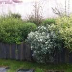 Paillis de schiste au sol en pas japonais et barettes d'ardoise pour un bac de plante